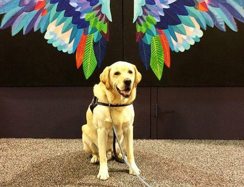 Who we help: Cappy's story