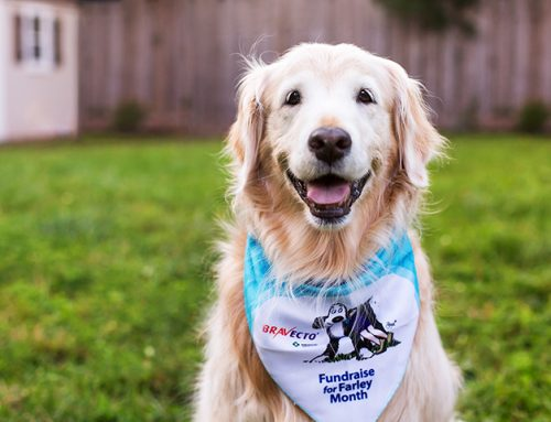Bravecto Fundraise for Farley Month helps sick and injured pets