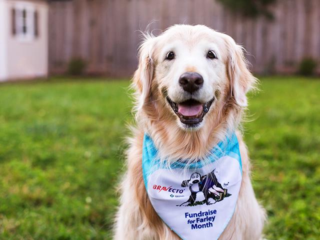 Bravecto Fundraise for Farley bandana