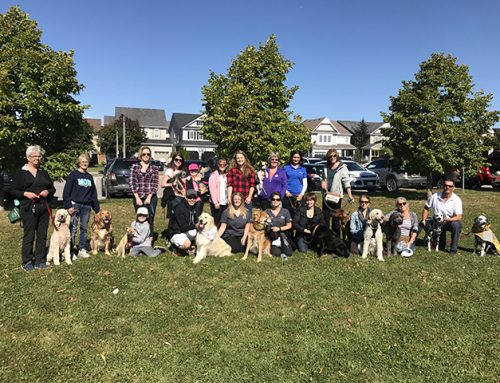2017 Bravecto Fundraise for Farley Month raises over $253,000