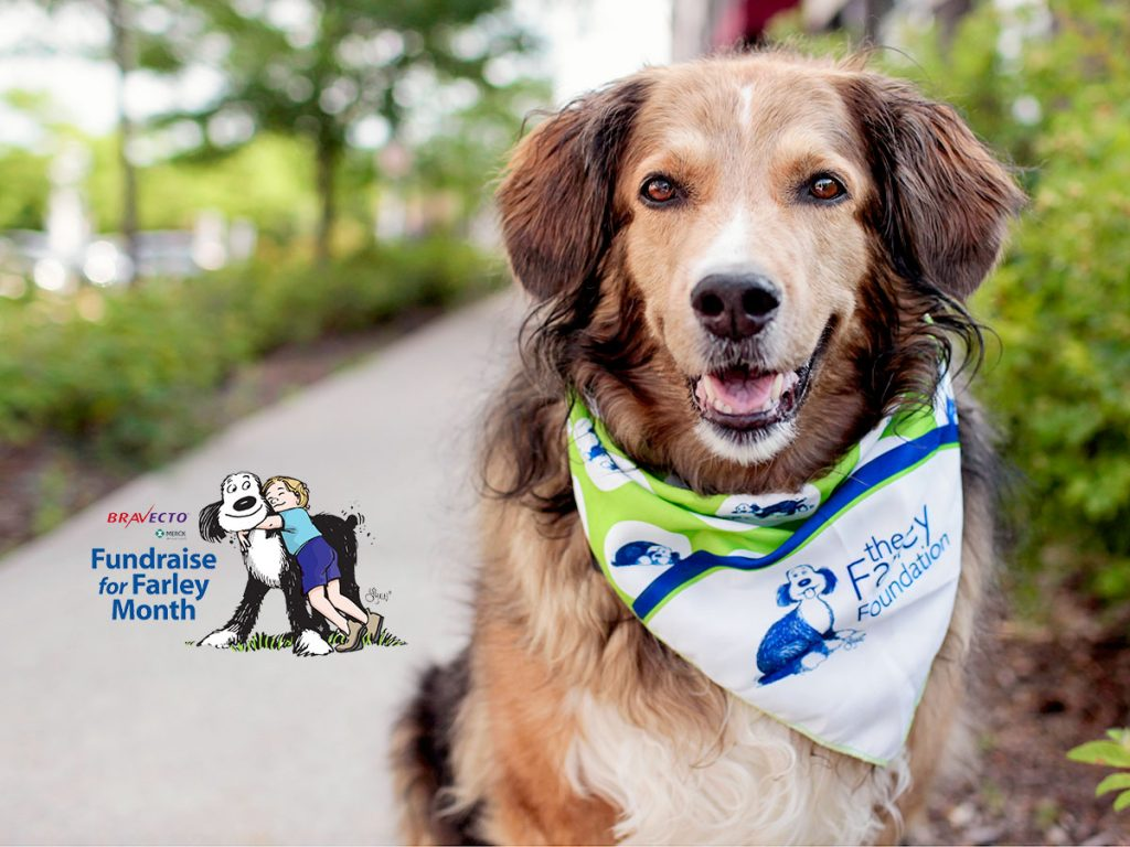 Dog wearing bandana in support of Farley Foundation in Ontario